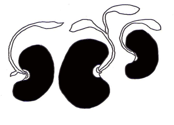 zubaan-ke-beej-black