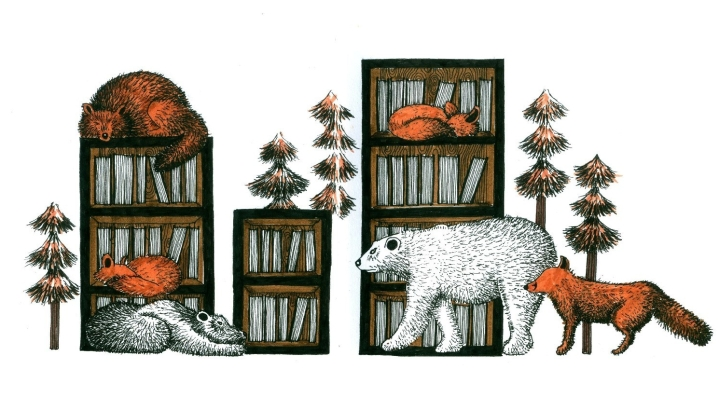 Fall foxes and bookshelves cropped